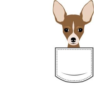Chihuahua in pocket - pocket pet