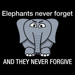 Elephants never forget and they never forgive