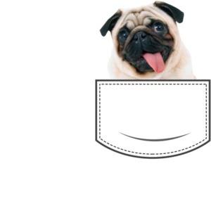 Pug in pocket - pocket pet
